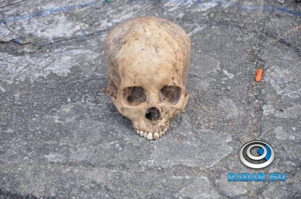 Cranio humano 1